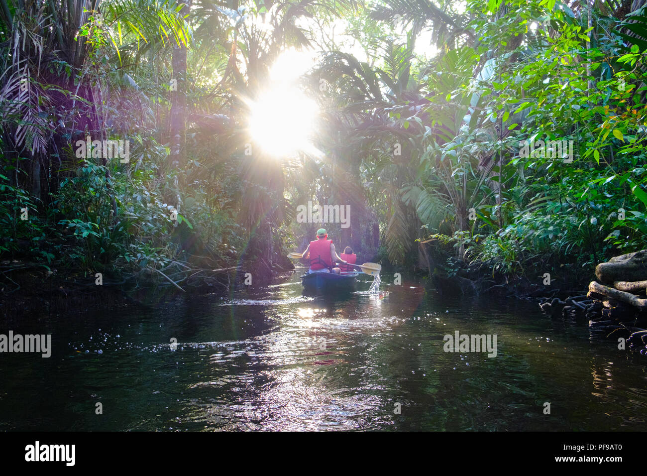Canoe excursion in  the wild Tortugero region - Stock Image