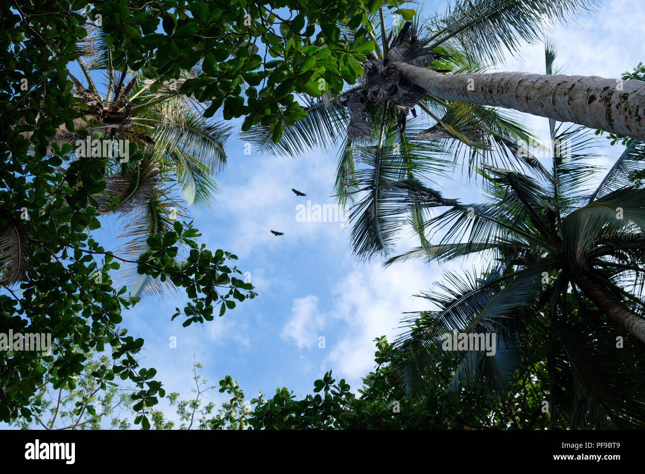 2 birds in a hole of blue sky in the Cahuita national park - Stock Image