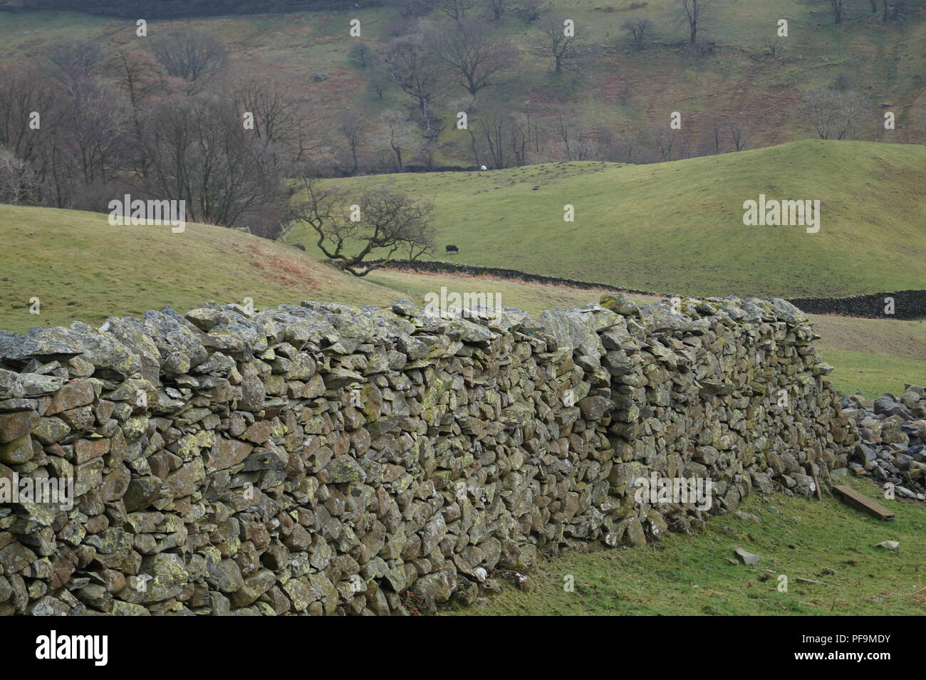 partially clasped dry stone wall in a field Stock Photo