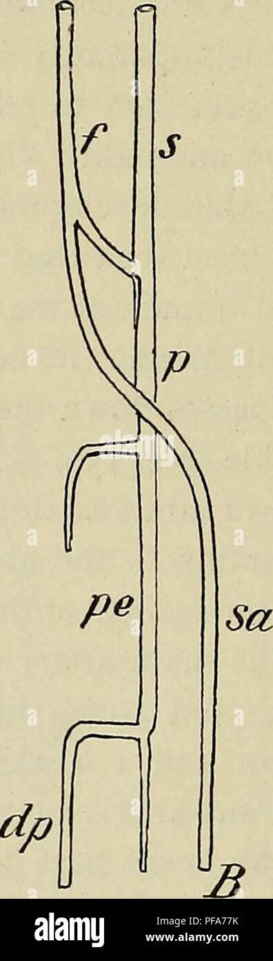 Peroneal Artery Stock Photos & Peroneal Artery Stock Images - Alamy