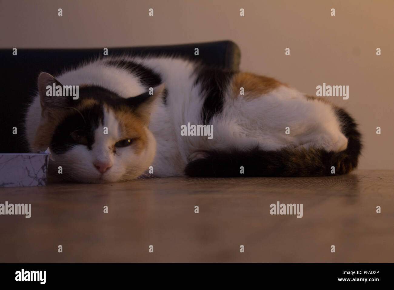 Cat sleeping on the table - Stock Image