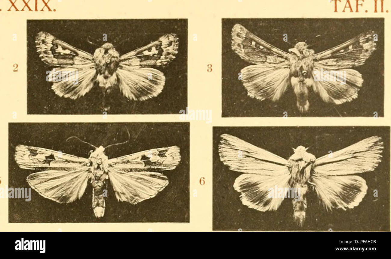 """. Deutsche entomologische Zeitschrift Iris. Lepidoptera. ^^^ ü. Please note that these images are extracted from scanned page images that may have been digitally enhanced for readability - coloration and appearance of these illustrations may not perfectly resemble the original work.. Entomologischer Verein """"Iris"""" zu Dresden. Berlin : R. Friedländer Stock Photo"""