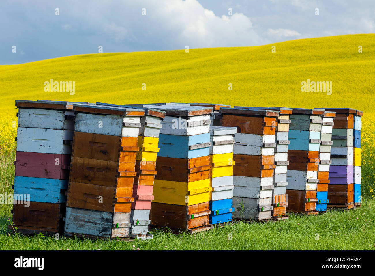 Colourful bee hives on the Canadian Prairie, Pembina Valley, Manitoba, Canada. - Stock Image