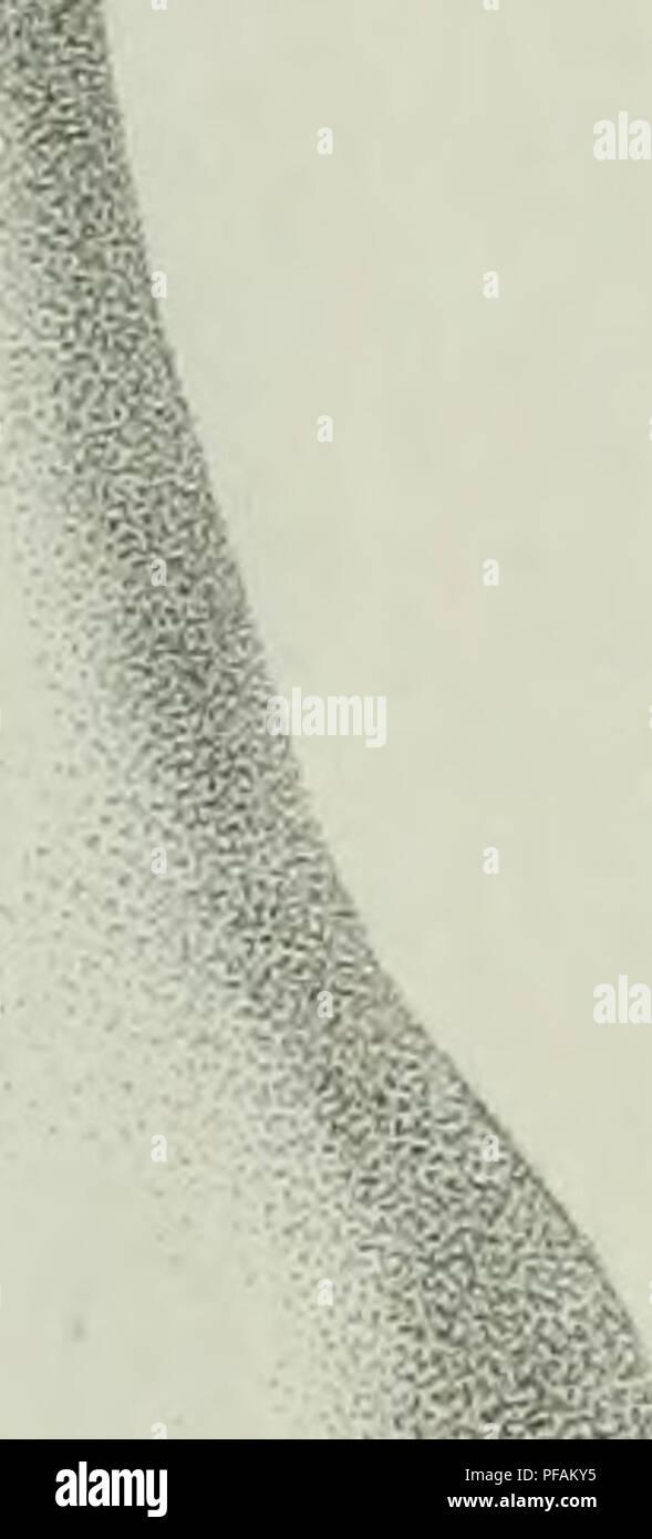 . Descrizione dei funghi mangerecci più comuni dell'Italia e de' velenosi che possono co' medesimi confondersi. Fungi; Mushrooms. r ^i Fu,.M. ry. Please note that these images are extracted from scanned page images that may have been digitally enhanced for readability - coloration and appearance of these illustrations may not perfectly resemble the original work.. Vittadini, Carlo; Cavagna Sangiuliani di Gualdana, Antonio, conte, 1843-1913, former owner. IU-R. Milano, Rusconi - Stock Image
