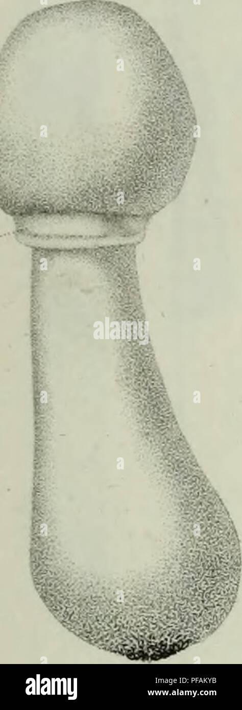 . Descrizione dei funghi mangerecci più comuni dell'Italia e de' velenosi che possono co' medesimi confondersi. Fungi; Mushrooms. Fu,-1.. Fuj.R.. Please note that these images are extracted from scanned page images that may have been digitally enhanced for readability - coloration and appearance of these illustrations may not perfectly resemble the original work.. Vittadini, Carlo; Cavagna Sangiuliani di Gualdana, Antonio, conte, 1843-1913, former owner. IU-R. Milano, Rusconi - Stock Image
