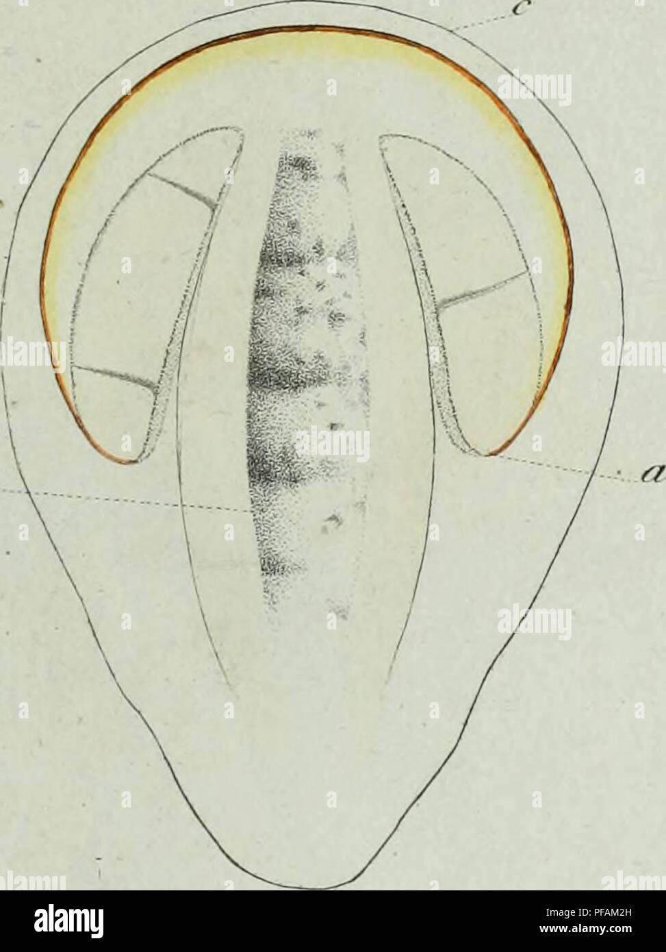 . Descrizione dei funghi mangerecci più comuni dell'Italia e de' velenosi che possono co' medesimi confondersi. Fungi; Mushrooms. F?</.f. 'â : .' fì^/7.. féÃL I&.//Z. Please note that these images are extracted from scanned page images that may have been digitally enhanced for readability - coloration and appearance of these illustrations may not perfectly resemble the original work.. Vittadini, Carlo; Cavagna Sangiuliani di Gualdana, Antonio, conte, 1843-1913, former owner. IU-R. Milano, Rusconi - Stock Image