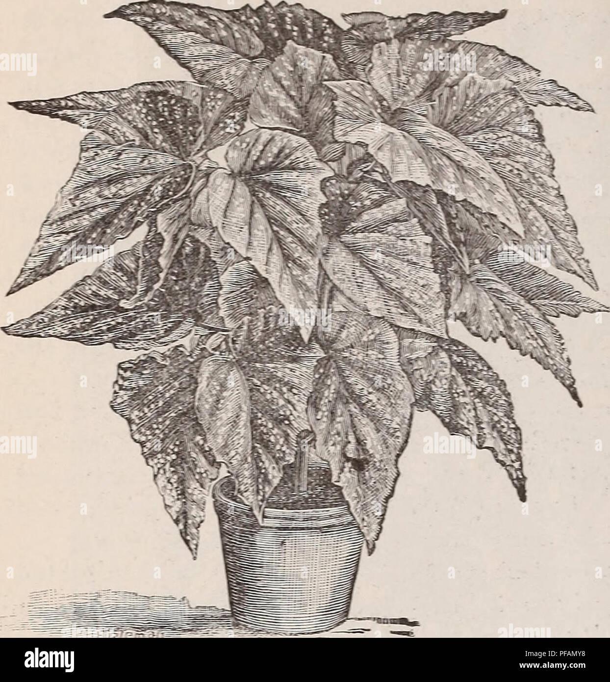Descriptive List Of Plants Nursery Stock New Hampshire Keene