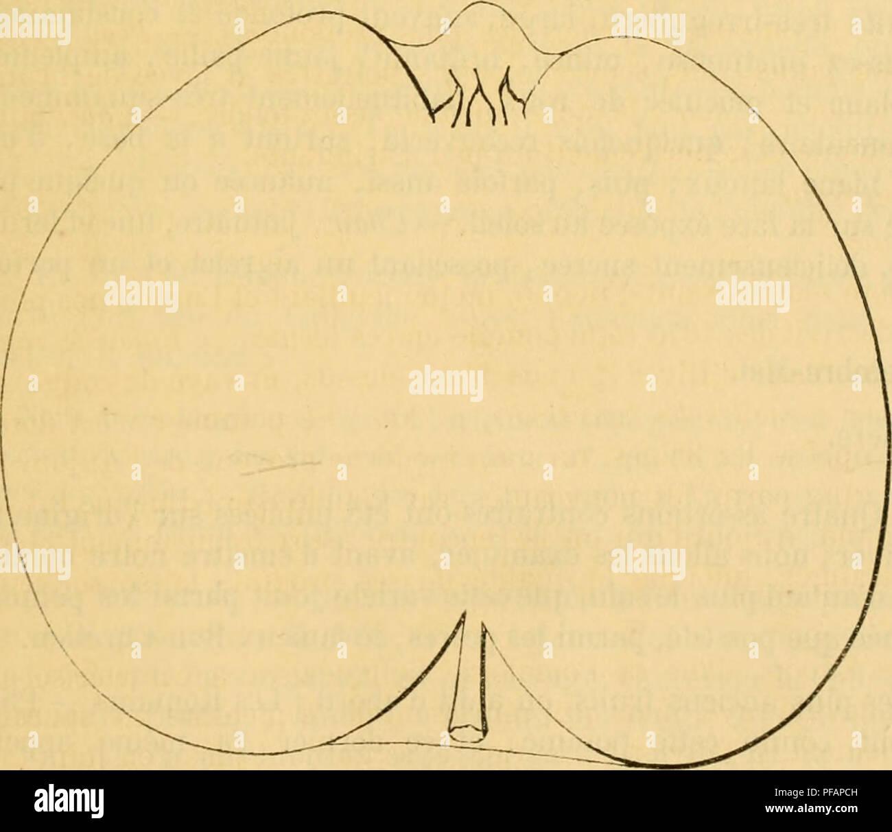 Ld 2 Stock Photos Images Page Alamy Wiring Diagram Bolens Estate Keeper Dictionnaire De Pomologie Contenant Lhistoire La Description Figure Des