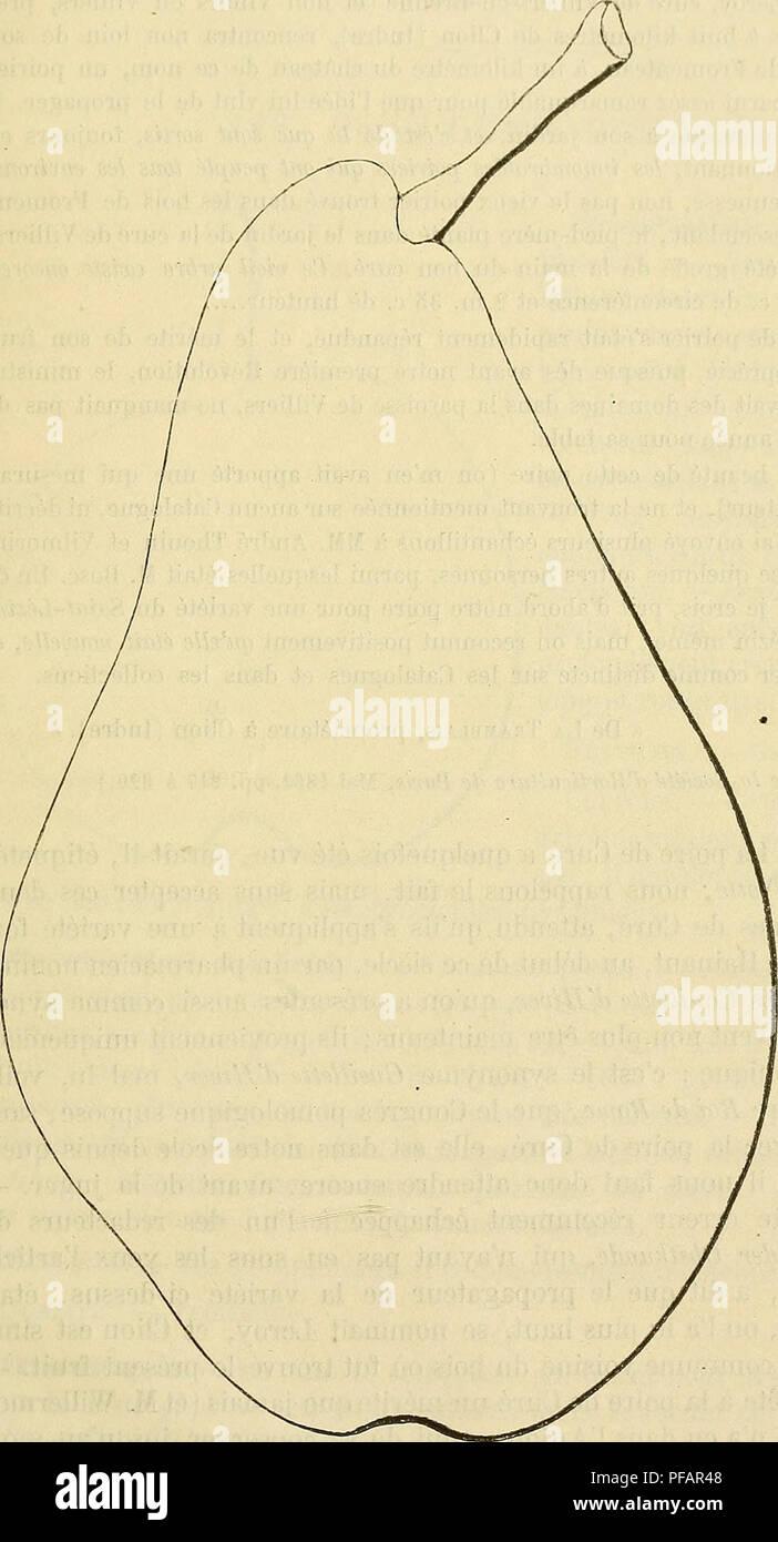. Dictionnaire de pomologie : contenant l'histoire, la description, la figure des fruits anciens et des fruits modernes les plus généralement connus et cultivés. Fruit. CUR 641 Maturité. â 'Vers la fiii d'octobre, et se prolongeant jusqu'en décembre; pou- vant mêmej rarement cependant, atteindre le mois de janvier. QuAjjTÃ. â Deuxième comme fruit à couteau, première comme fruit à compote. Poire de Curé. Historique. â Nous avons cru long- temps, trompé par le synonyme Suint- Lézin, que la généra- lité des pomologues modernes ont erro- nément attribué au fruit ici décrit, que ce - Stock Image