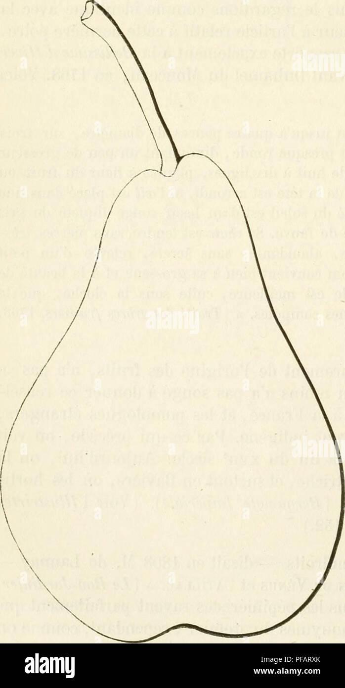 . Dictionnaire de pomologie, contenant l'histoire, la description, la figure des fruits anciens et des fruits modernes les plus g©n©ralement connus et cultiv©s. Fruit-culture. 220 BEL âBÃQ les rencontre encore ainsi qualifiés dans plusieurs publications de date assez récente, notre remarque ne saurait être complètement inutile. â Notons également que la Belle de Noisette n'a rien de commun avec la Bellissime d'Hiver. Poire BELLISSIME D'HIVER DE BUR. â Synonyme de poire Belle-Angevine. Voirie nom. Poire BELLISSIME DE JARDIN. â Synonyme de poire Béquesne. Voir ce nom. Poire BELLISSIME D - Stock Image