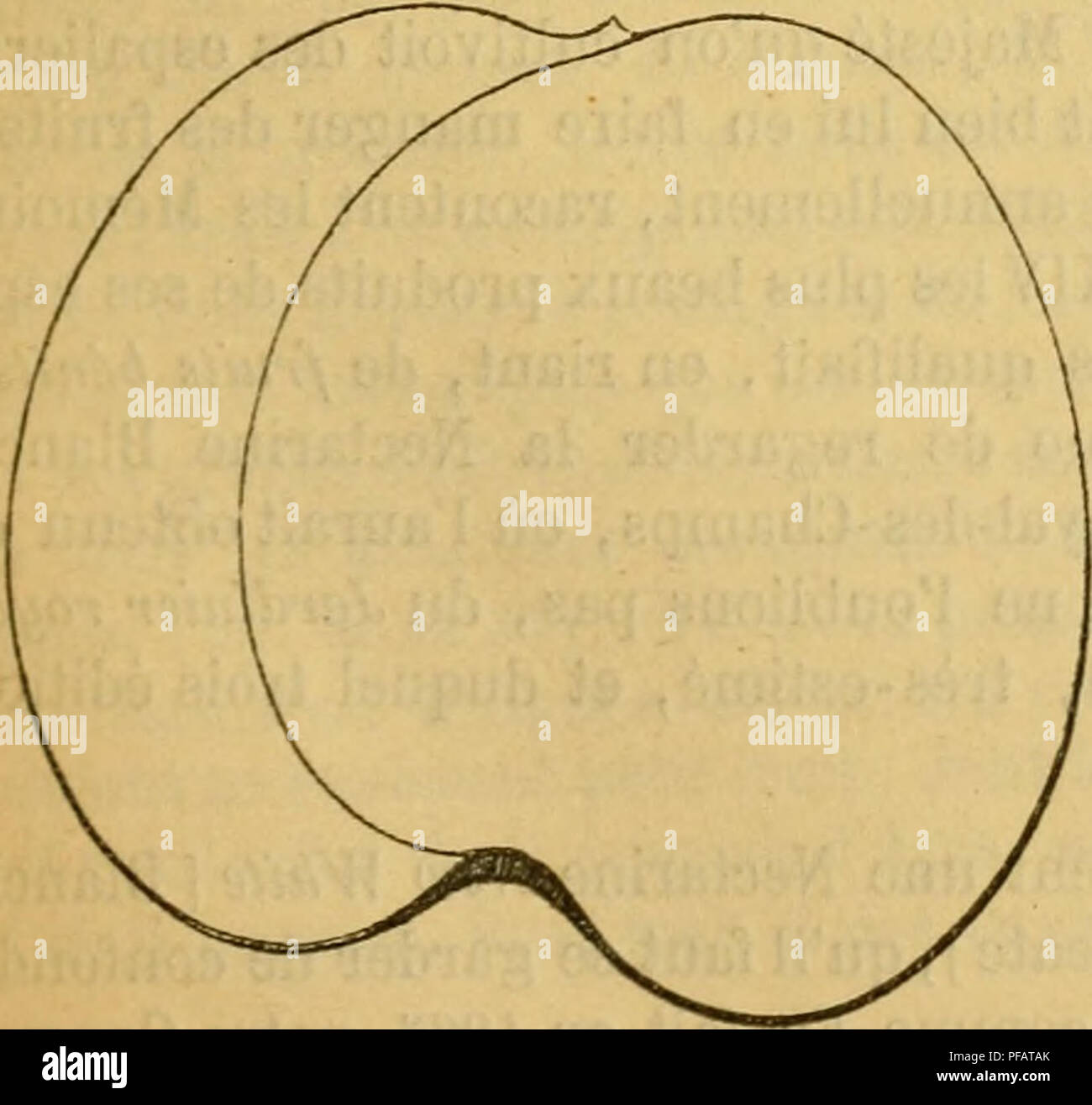 Dictionnaire De Pomologie, Contenant Lu0027histoire, La Description, La Figure  Des .