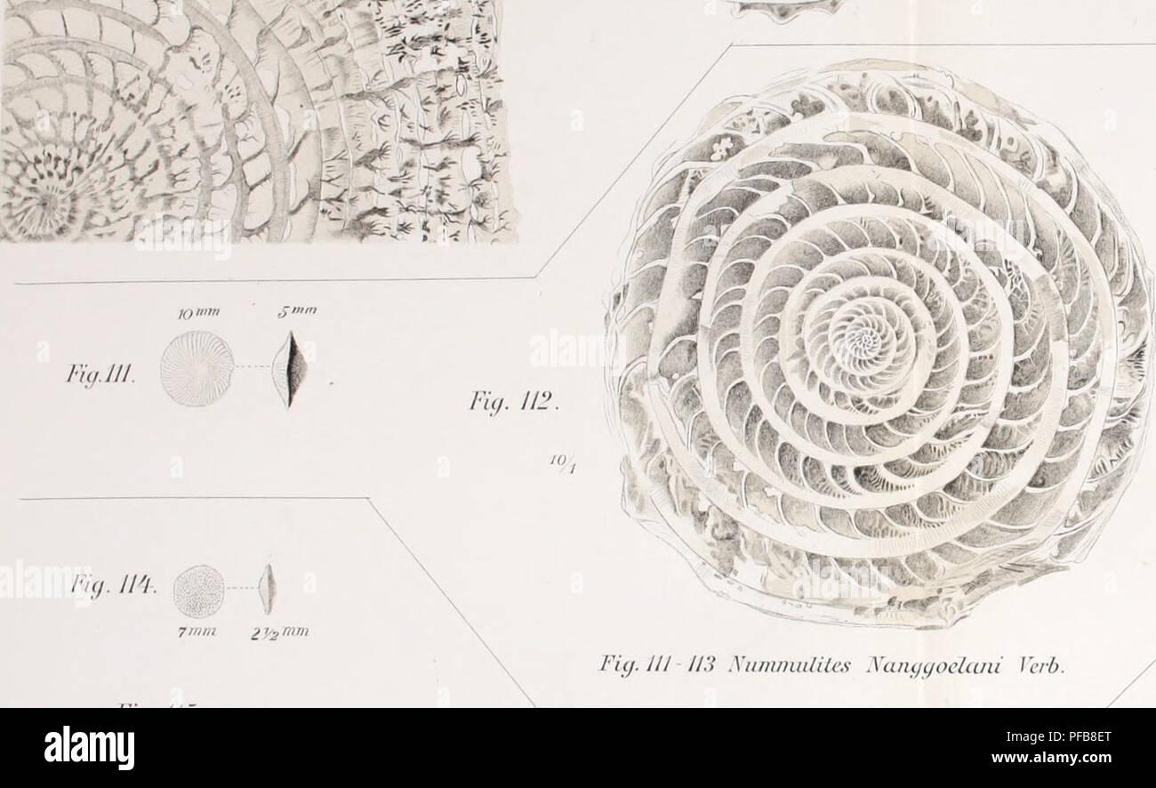c5f5b661353d . Description géologique de Java et Madoura. Geology  Geology  Volcanoes   Foraminifera