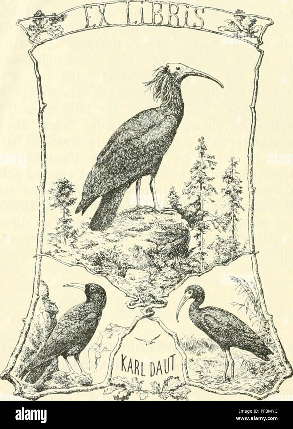 . Der Ornithologische Beobachter. Birds; Birds. 150 — ganzen Winter über dort aufgehalten hatte. Dasselbe befindet sich im Zofinger Museum. C i c 0 n i a nigra. Ein altes Männchen des S c li w a r z en Storches wurde im September 1875 von meinem Bruder, Ed. Fischer erlegt, und im Sei)tember 1886 beobachtete ich selbst dort ein Exemplar. Das erlegte Exenqtlar kam leider durch Kauf in eine fremde Sammlung.. P 1 e g a d i s f a 1 c i n e 11 u s. Im Jahr 1883 trat ein Trupp Sichler von fünf Exemplaren auf, von denen drei oder vier bei Sursee erlegt wurden und in die Sammlung von Stauffer in Luzern - Stock Image