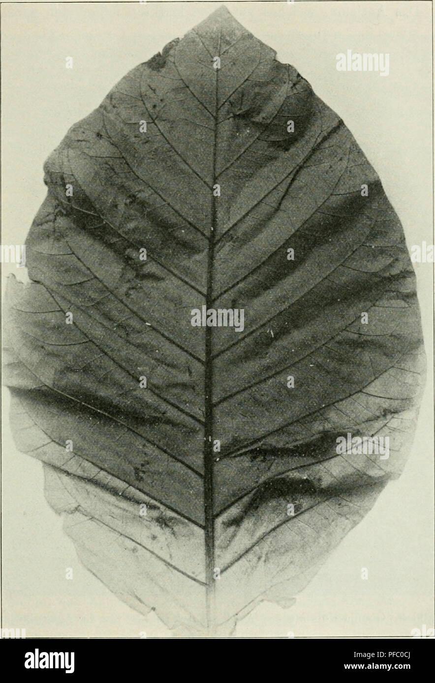 Der Tropenpflanzer; Zeitschrift Fr Tropische Landwirtschaft. Tropical  Plants; Tropical Crops. U2014 .