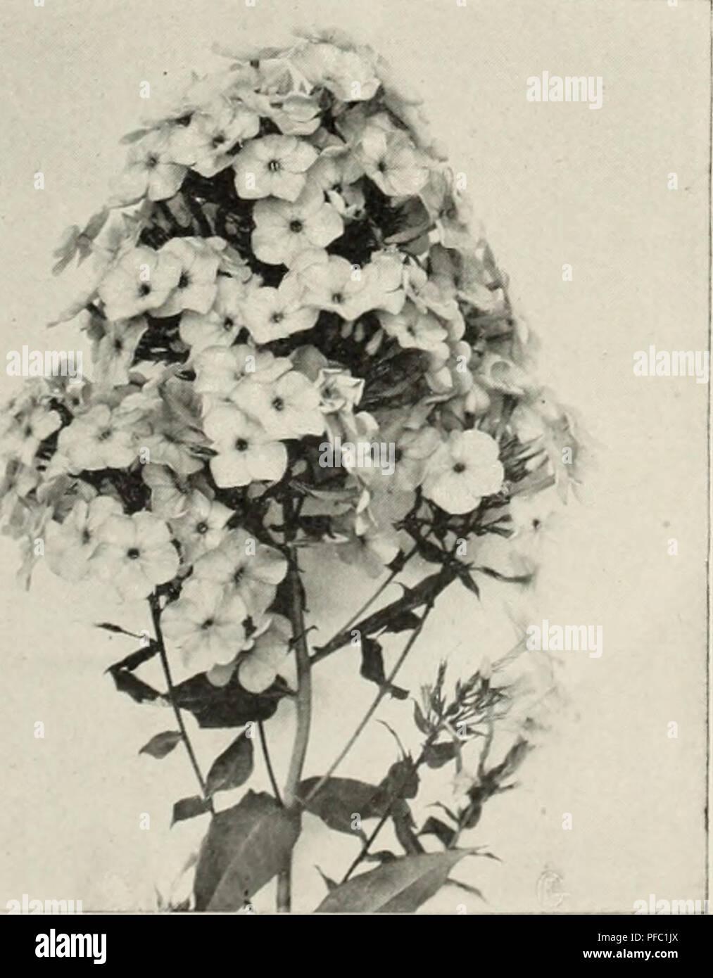 Descriptive Catalog Nursery Stock Catalogs Horticulture Catalogs