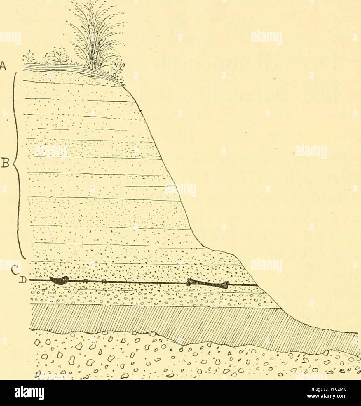 . Der Mensch, sein Ursprung und seine Entwicklung, in gemeinverständlicher Darstellung. Human beings; Evolution. 354 W. Lechs: Der Mensch. Stück eines Unterkiefers von derselben Fundstelle erhalten, welcher eine dem Schädeldach entsprechende Beschaffenheit zeigen soll; eine Veröffent- lichung über diesen letzten Fund ist bisher nicht erfolgt. Zusammen mit diesen Resten wurde eine große Anzahl Säugetiere wie Elefanten, Nashörner, Flußpferde, Hyänen u. a. entdeckt, aber sämtlich zu Arten gehörend, welche längst ausgestorben sind. Die soeben erwähnten Skeletteile sind vollständig. Fig. 360. Durch - Stock Image