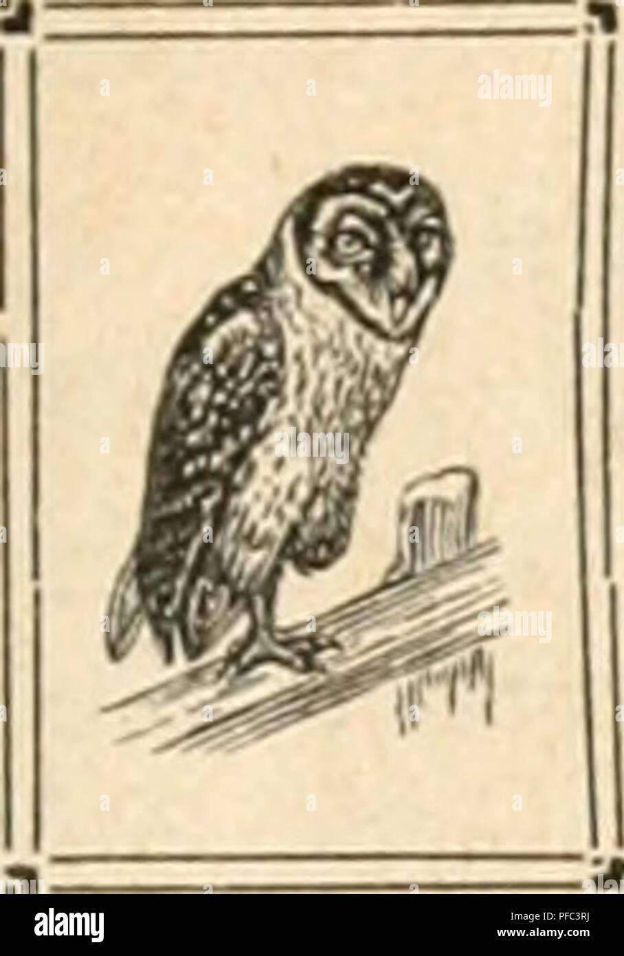 buy popular 9f04c 30dbe Der Ornithologische Beobachter. Birds  Birds. Sfa Der OrnitDoloaiscDe  BeobacDter   Monatsberichte für .