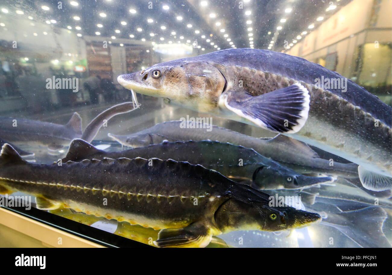 Oceanarium in St. Petersburg: address, photo, reviews 33