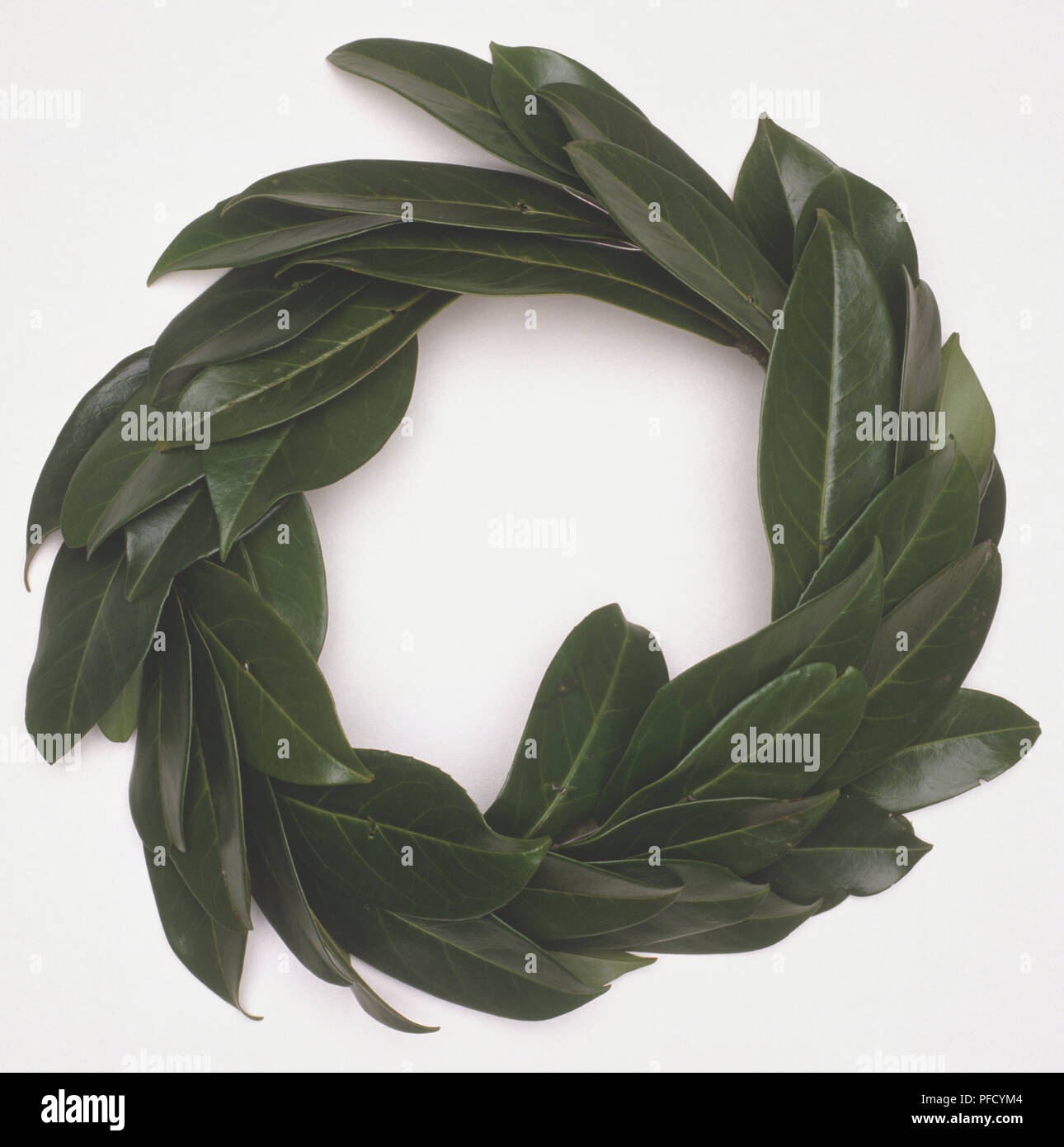 Wreath of leaves. - Stock Image