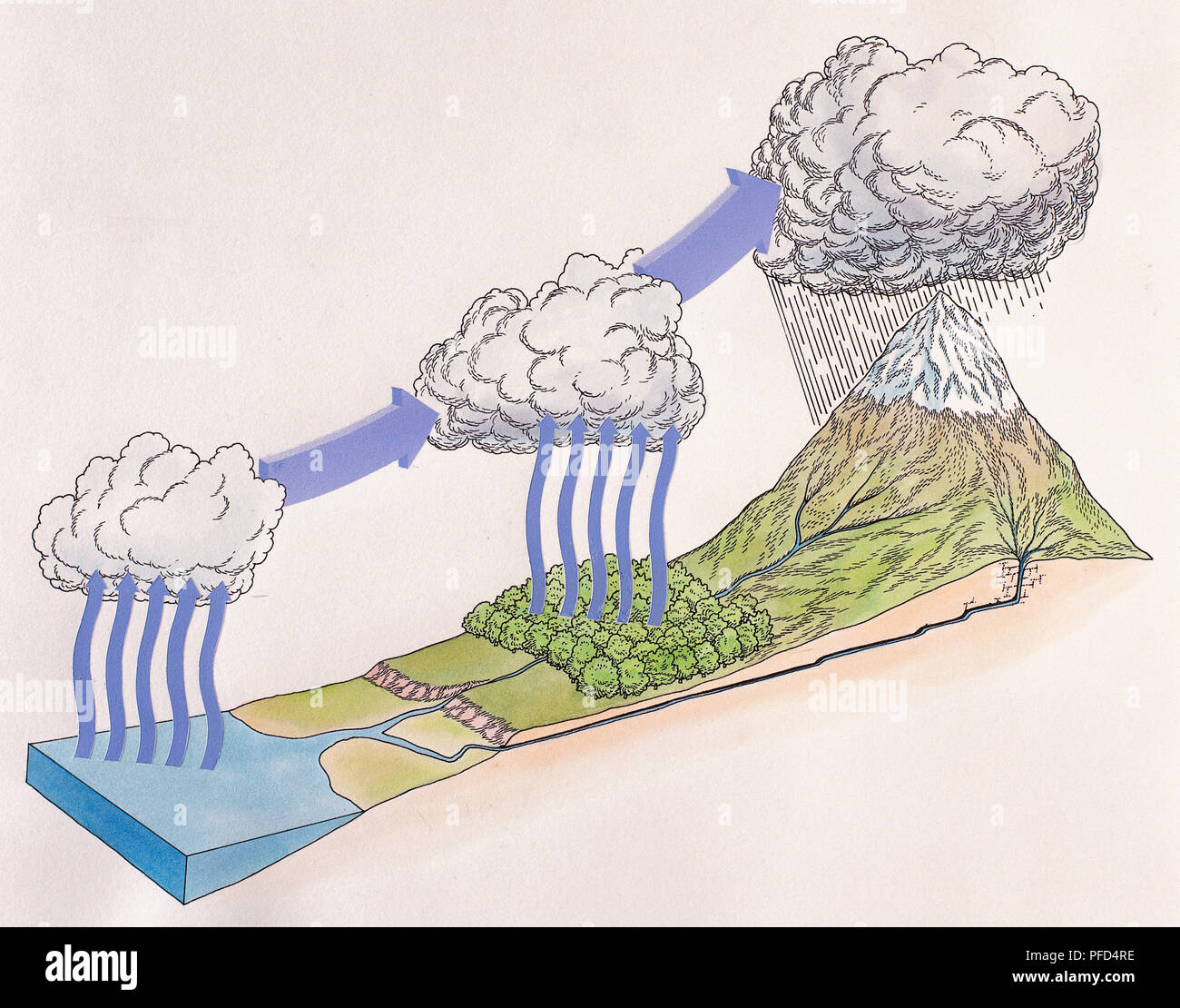 Diagram showing water cycle of rain and snow evaporating sea water forming cloud trees