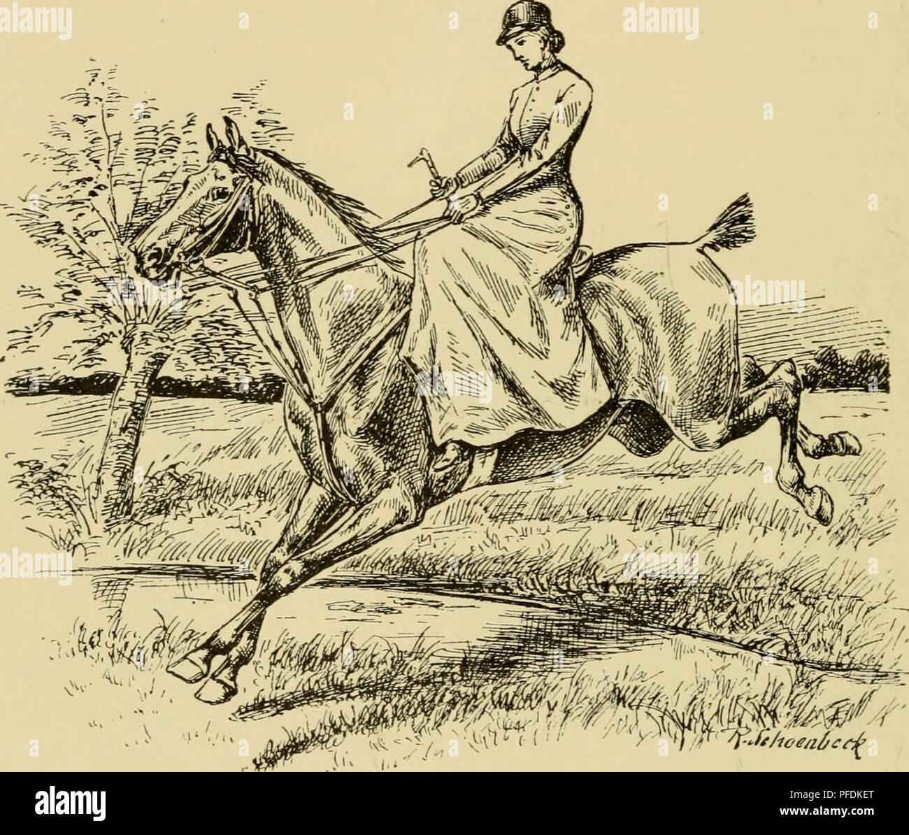 . Der Damen-Reitsport : Mit 50 Abbildungen = Women riders : with 50 illustrations. Horses; Women in horse sports. — 148 — eine Barriere, Hürde etc. zum Hochsprung, bedient man sich am besten des kurzen Galopps, um das Pferd recht versammelt zu erhalten; in der Karriere anzureiten, wenn es nicht die Notwendigkeit erfordert, vermeide die noch in der Lehrperiode befindliche Reiterin lieber. Um das Pferd an den Sprung zu gewöhnen, muß man mit ganz niedrigem Barriere- oder Stangensprung. *<• 'F-fi/ioeaiceit' Fig. 42. Der Weitsprung. anfangen und ganz allmählich die Anforderungen stei- gern, doch - Stock Image