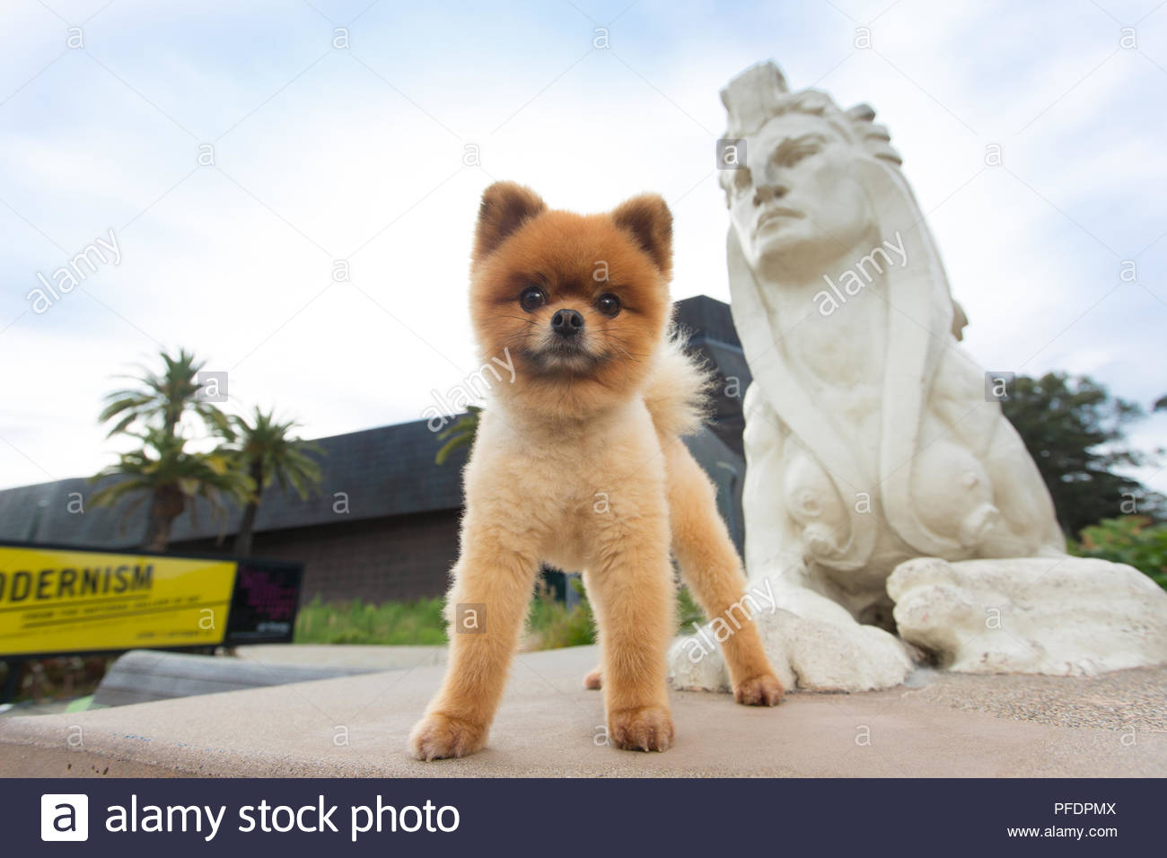 Pomeranian Standing Next To Sphinx Statue In Front Of Deyoung Museum