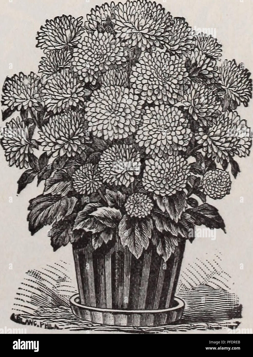 Descriptive Catalogue Of Vegetable Flower And Farm Seeds Bulbs