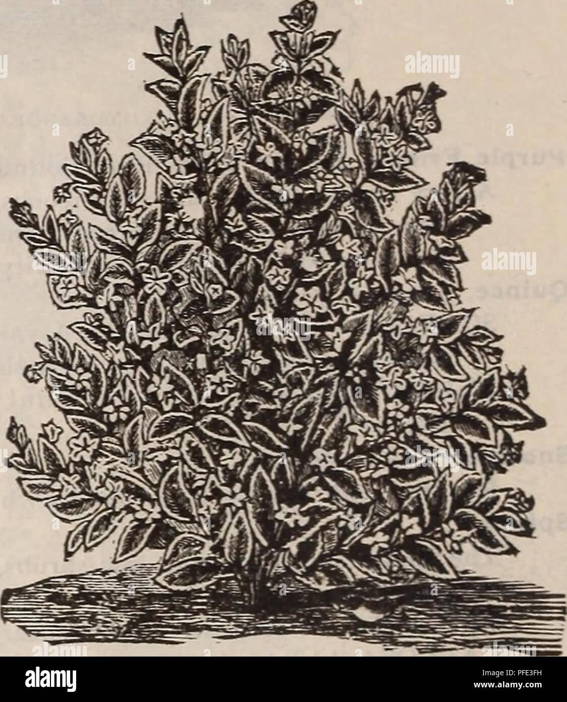 Descriptive Catalogue Of Fruit And Ornamental Trees Shrubs Plants