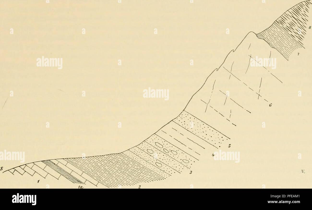 . Denkschriften der Kaiserlichen Akademie der Wissenschaften, Mathematisch-Naturwissenschaftliche Classe. Geologie des Tatragebirges. I. 667 Die Marinfauna besteht hauptsächlich aus Bivalven, Brachiopoden, Belemniten und Crinoiden; Gasteropoden sind sehr selten und Ammoniten, die für die Altersbestimmung wichtigsten Formen, scheinen so gut wie gänzlich zu fehlen. Häufig findet man Belemniten, durchwegs paxillose, liasische Formen. Durch fleissiges Sammeln könnte man namentlich im Koscielisker Thal (Westseite, an der Smytnia), im Tycha-Thal und in ChochohJwka eine namhafte Fauna zusammenbringen Stock Photo