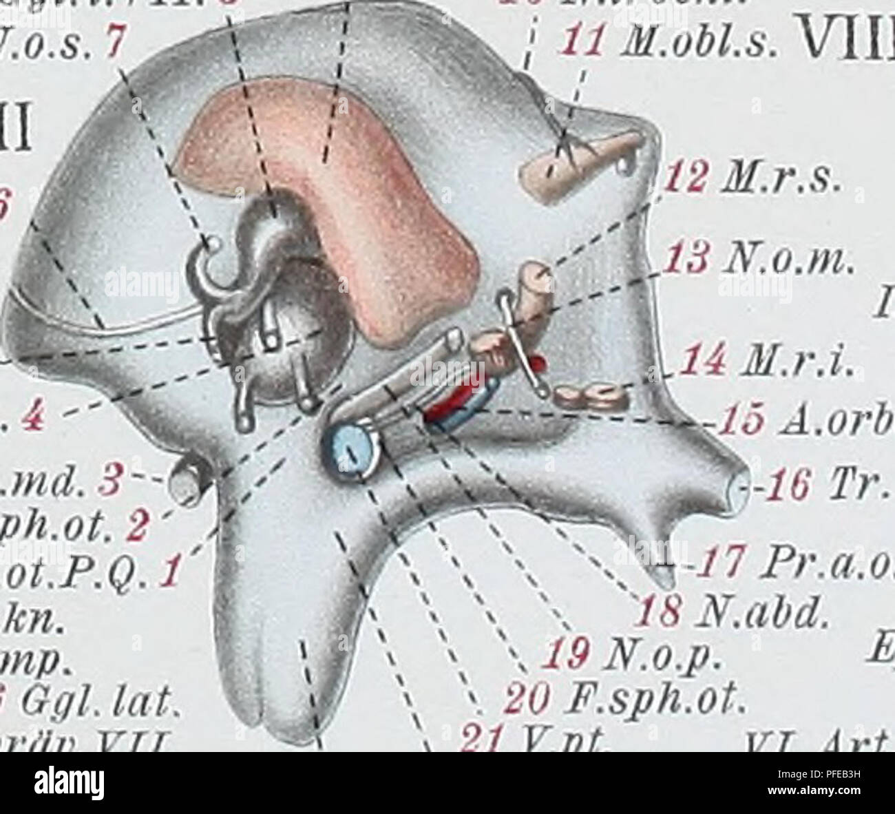 R 32 Stock Photos Images Page 3 Alamy Humbucker Wiring Diagram Obl Denkschriften Der Medicinisch Naturwissenschaftlichen Gesellschaft Zu Jena 20 F