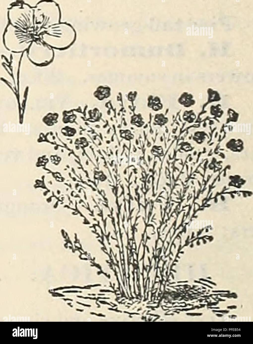 Descriptive Catalogue Of The Jewell Nursery Co Nursery Stock