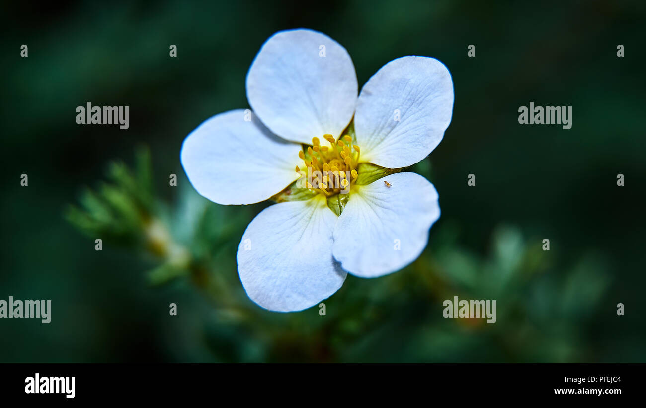 Beautiful artistic macro flowers with blurred background - Stock Image