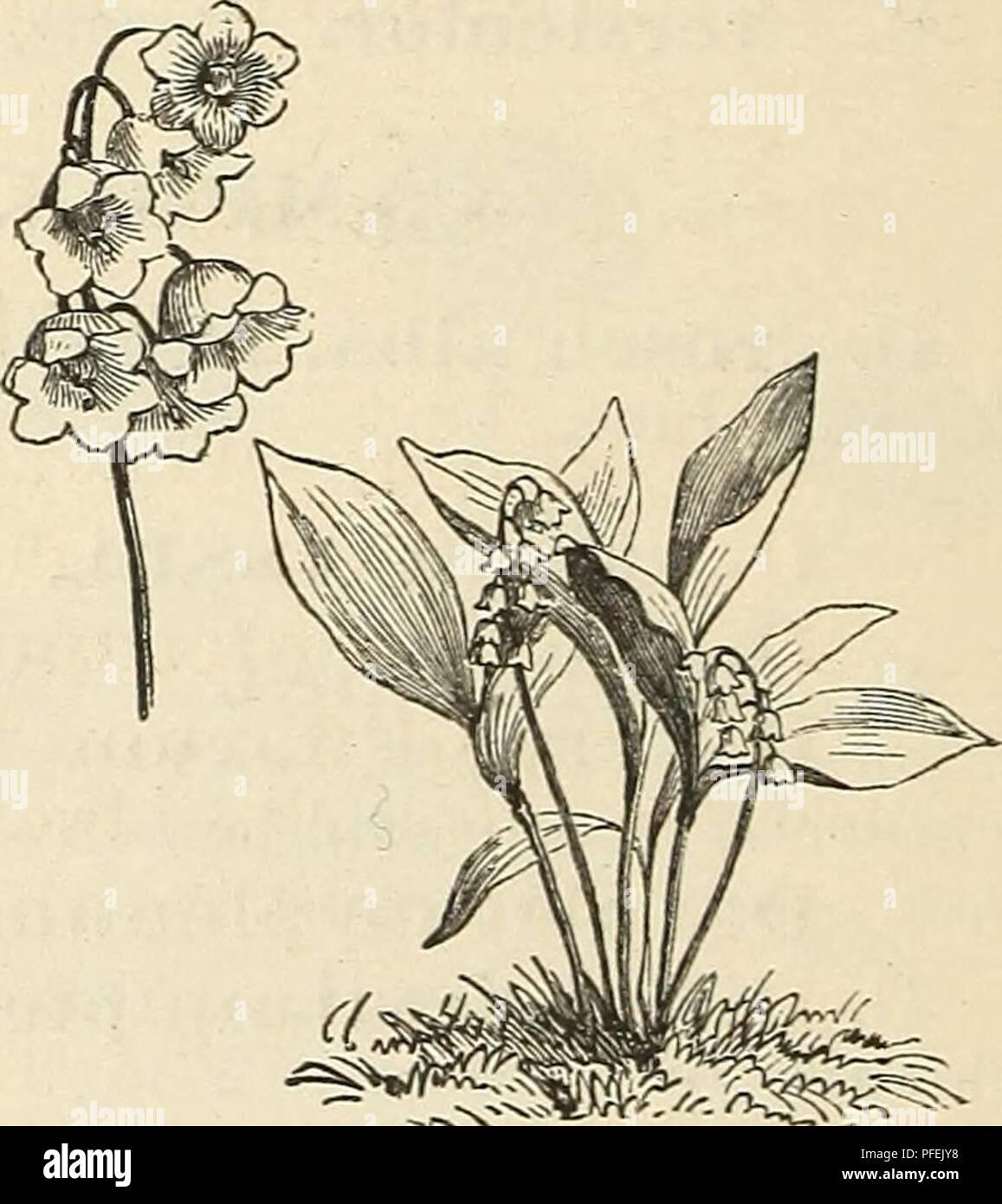 Descriptive Catalogue Of Hardy Ornamental Trees Shrubs Herbaceous