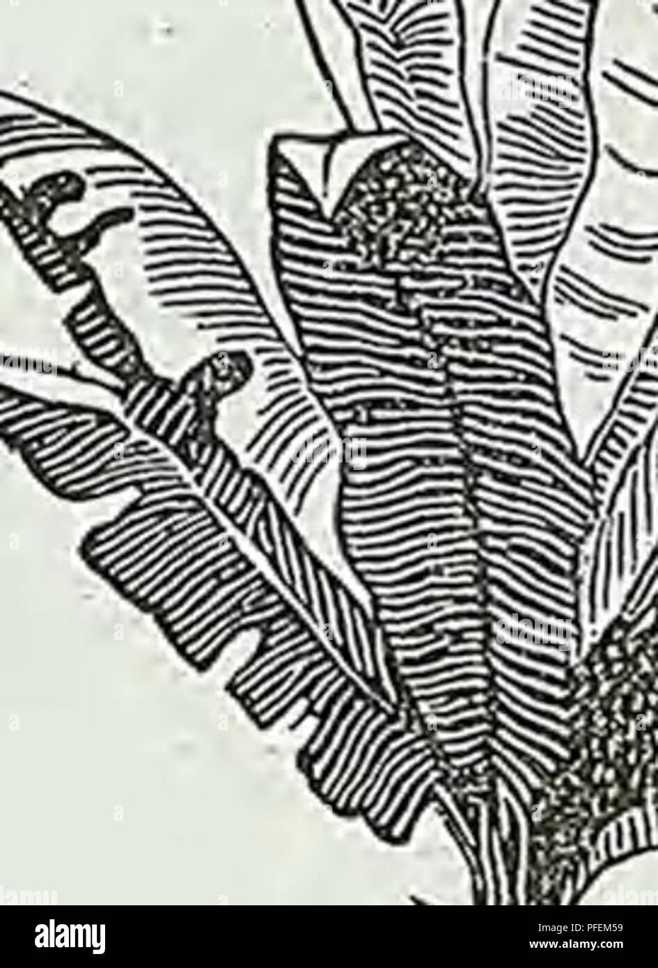 De Ree Seeds Collections Flower Seeds Nasturtium Tall