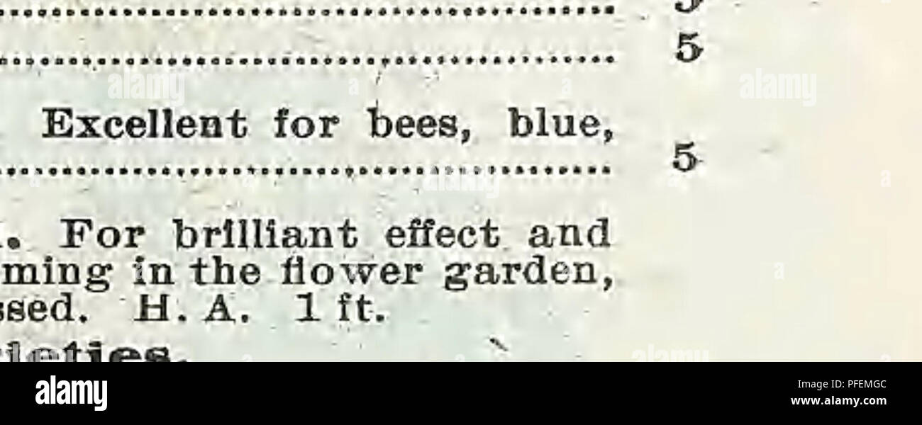 """. Descriptive catalogue of vegetable, flower, and farm seeds. Nurseries (Horticulture); Nursery stock; Seeds; Bulbs (Plants); Gardening; Equipment and supplies; Bedding plants; Weeber & Don. Annual. Â«^ PerenniaL THE HANDSOMEST ANNUALS. THE MOST FAVORITE PERENNIALS. These old-fashioned flowers are at present, like the well-knowu Dahlias, regaining their former popularity. This is not strange , ^ â """" when we consider how little time is required for their cultuÂ«> Their brilliant, dazzling colorings and wonderful variety make a very effective display in the garden or for cut-flowers  Stock Photo"""