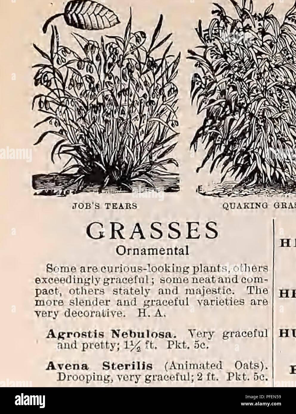Descriptive Catalogue Of Vegetable Flower And Farm Seeds