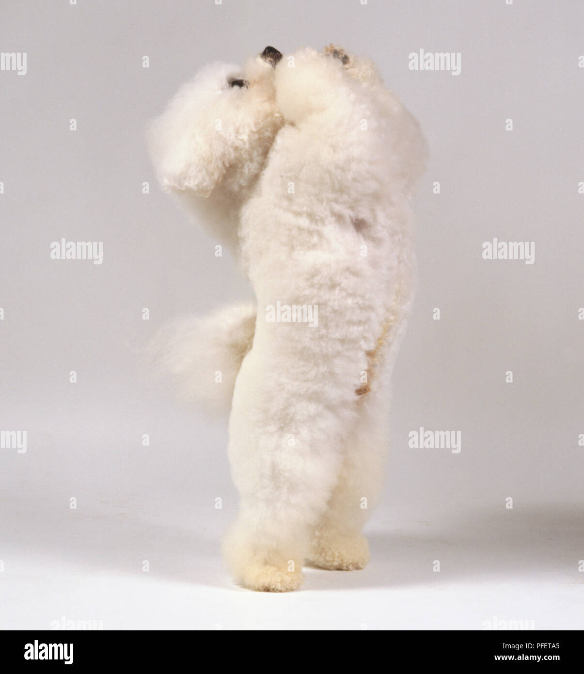 Dogs Hind Legs Stock Photos & Dogs Hind Legs Stock Images