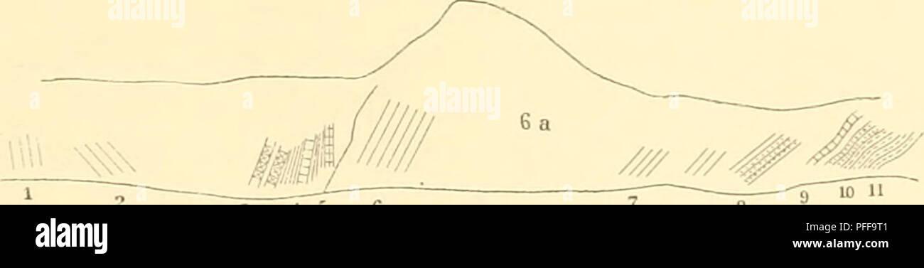 . Denkschriften der Kaiserlichen Akademie der Wissenschaften, Mathematisch-Naturwissenschaftliche Classe. Geologische Untersnchungm im östlichen Bnlkrin. 325 In der Stadt selbst wurden in der Nähe des Bcli-Lom, im Schotter Keste an Elephasprimigenius g&innAQM. Von Tikilitasch im Norden von Rasgrad (3 Stunden davon entfernt) liegt ein gewaltiger, gebogener Stirn- zapfen eines Hohlliörners (viell. Bos primirjenius Bl.) in der Snmmlung zu Rasgrad, der eine Stärke von 17 cm und eine Sehueuiänge von 50 cm besitzt; das abgebrochene Ende i)esitzt immer noch 8 cm. Durchmesser. Auf dem Wege nach  - Stock Image