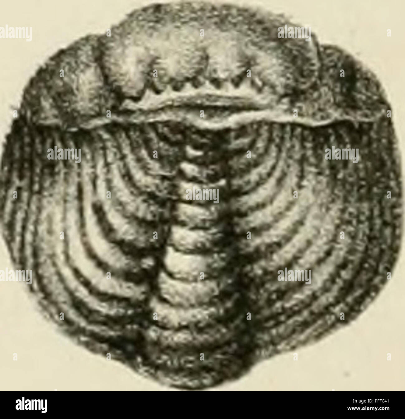 . D. Eduardi Eichwaldi, publ. ord. apud Casanens. Profess. Acad. Caes. Nat. Cur. Leop. Carol. mult. Societ. Liter. Socii, Geognostico-zoologicae per ingriam marisque Baltici provincias nec non de trilobitis observationes. Geology; Zoology; Paleontology. /â /a Q.. />.. ^^^â aof. ,'70**j. Please note that these images are extracted from scanned page images that may have been digitally enhanced for readability - coloration and appearance of these illustrations may not perfectly resemble the original work.. Eichwald, Carl Eduard von, 1795-1876; Kazanski universitet. Casani : Typis Universitatis - Stock Image