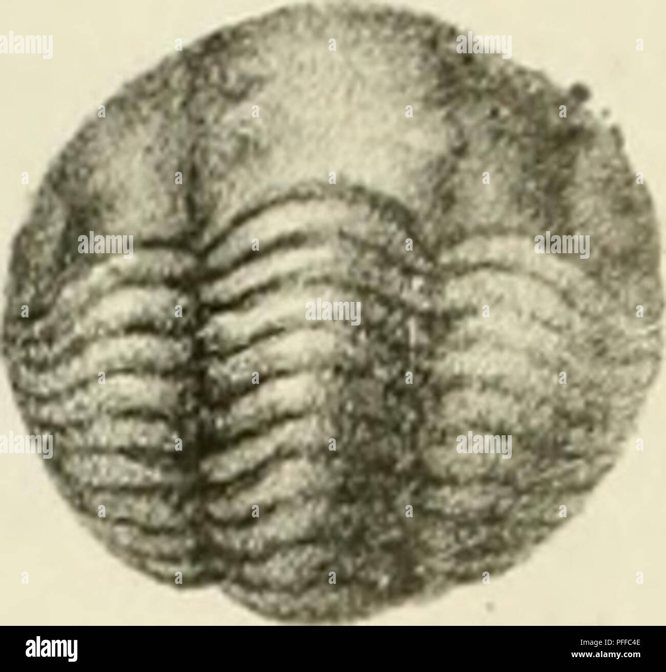 . D. Eduardi Eichwaldi, publ. ord. apud Casanens. Profess. Acad. Caes. Nat. Cur. Leop. Carol. mult. Societ. Liter. Socii, Geognostico-zoologicae per ingriam marisque Baltici provincias nec non de trilobitis observationes. Geology; Zoology; Paleontology. f-iif J. ./. Please note that these images are extracted from scanned page images that may have been digitally enhanced for readability - coloration and appearance of these illustrations may not perfectly resemble the original work.. Eichwald, Carl Eduard von, 1795-1876; Kazanski universitet. Casani : Typis Universitatis Caesareis - Stock Image