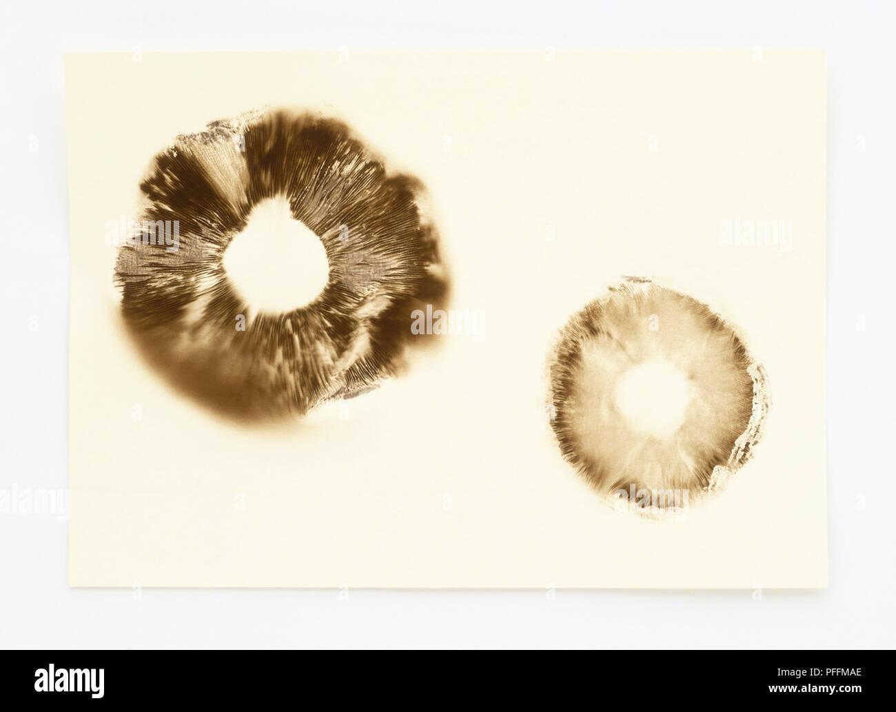 Mushroom Spores Printed On Paper Stock Photo 216089510 Alamy