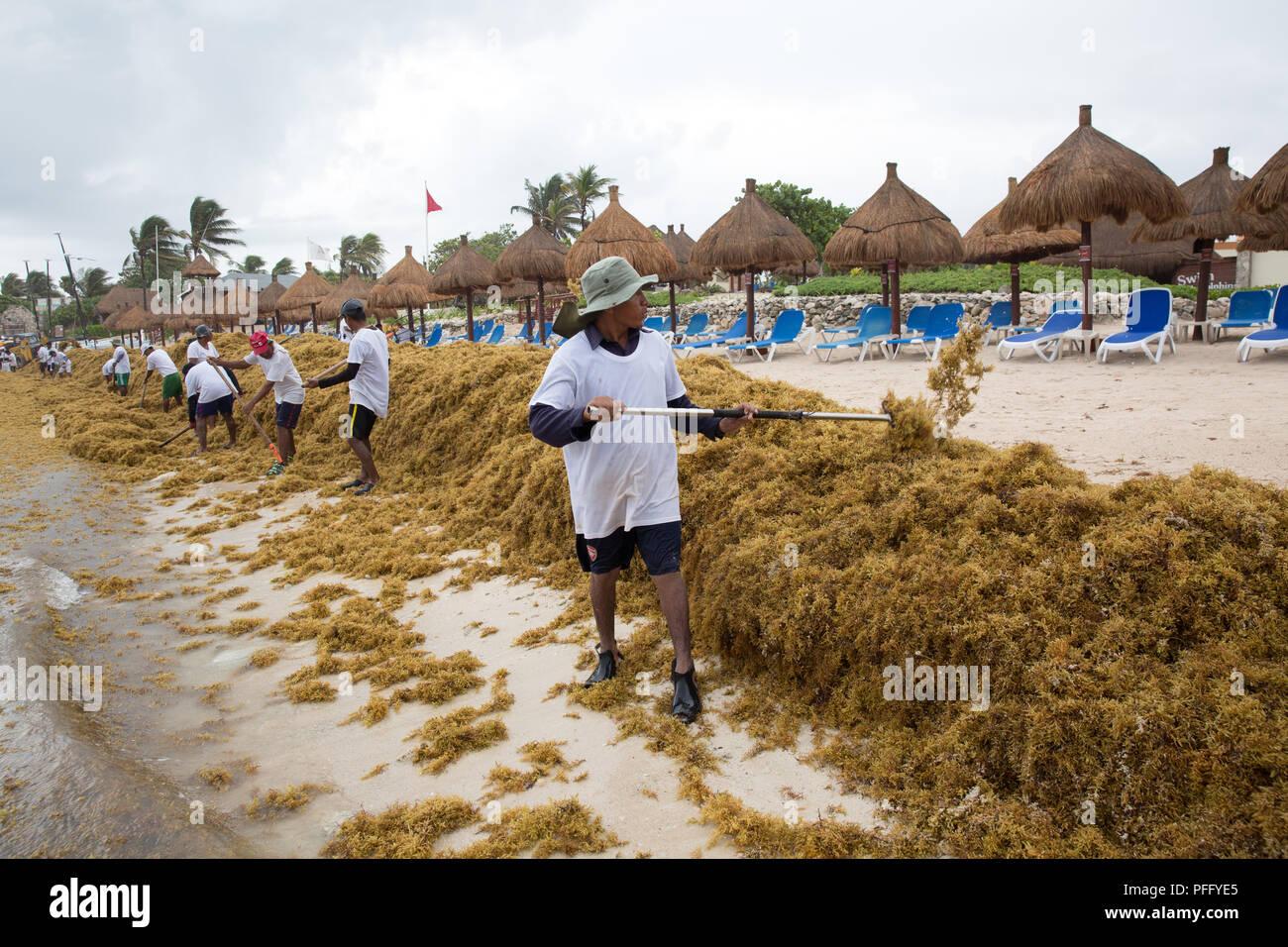 Workers remove Sargassum seaweed at Gran Bahia Principe