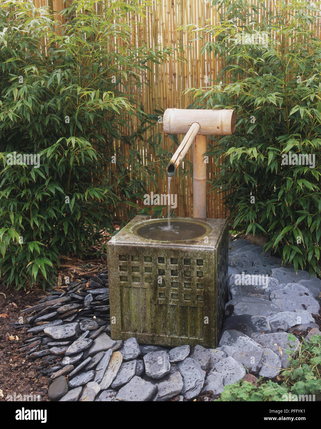 Water Trickling Through Bamboo Pipe And Spout Into Square Basin, In Front  Of Bamboo Garden Fence.