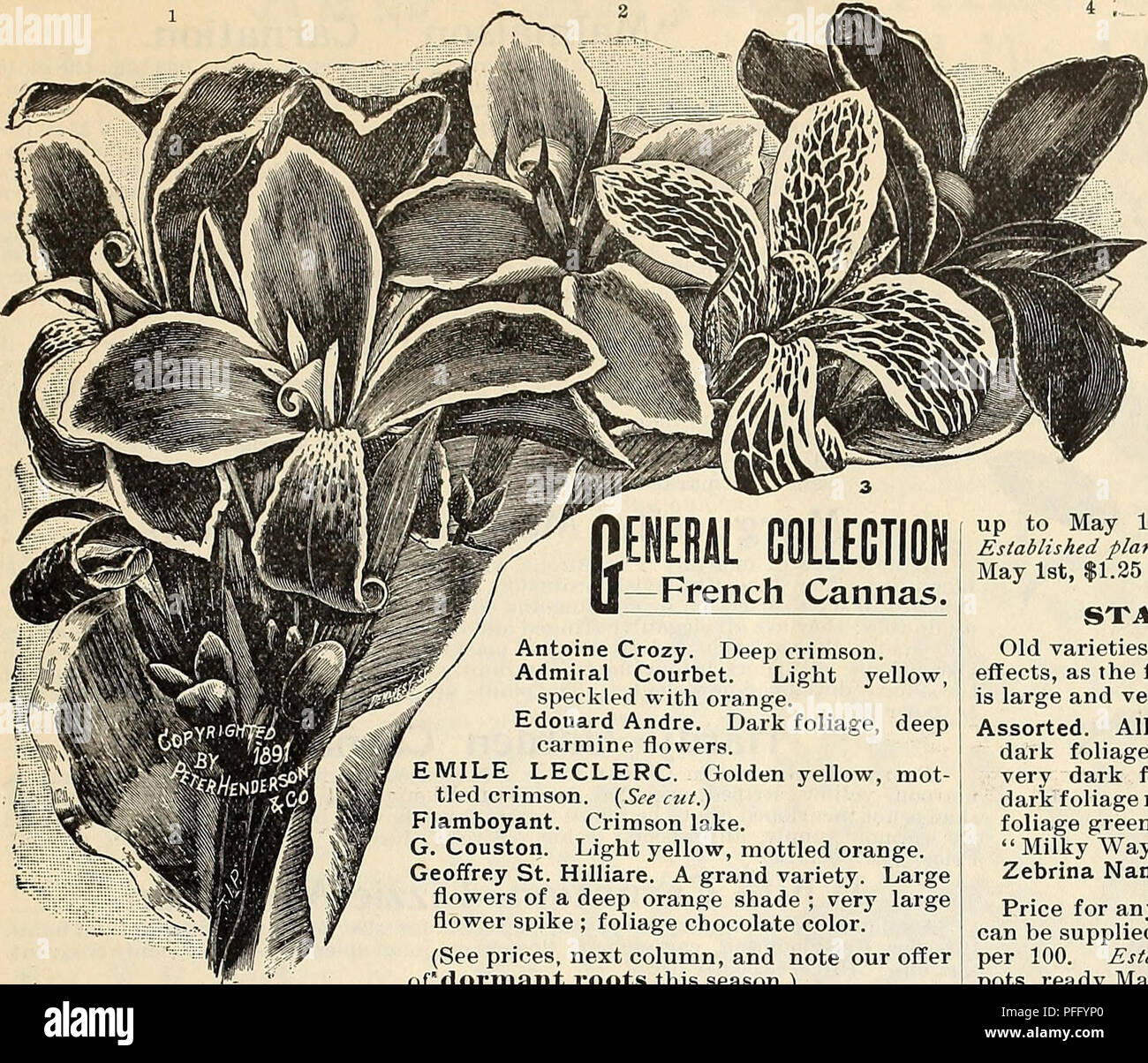 Dealers And Florists Wholesale List Of Plants Seed Industry And
