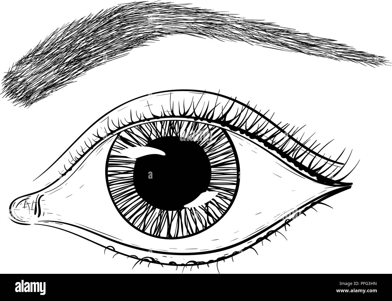 Eye Line Drawing Stock Photos Eye Line Drawing Stock Images Alamy