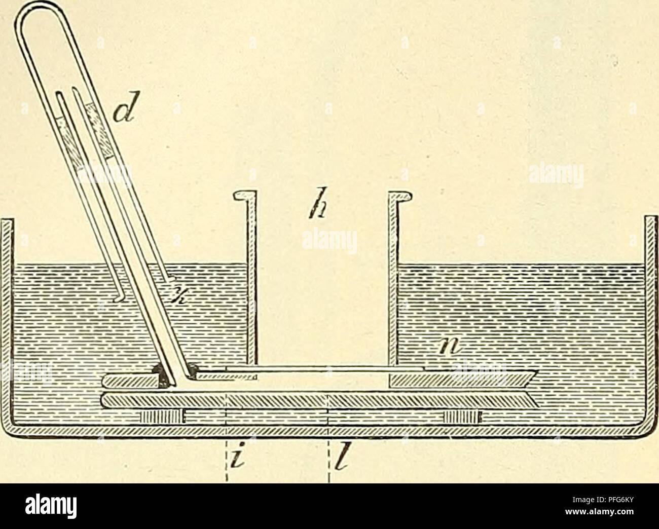. Das Mikroskop. Ein Leitfaden der wissenschaftlichen Mikroskopie. Microscopy; Microscopes. 230 durch starke Kautschukringe fest angepresst. Um einen Luftwechsel zu ermöglichen, ist ferner das Glasröhrchen (z) einer Durchbohrung des oberen Objectträgers eingekittet, die durch die eingeschliffene Rille (i) mit der Luftkammer communiciert. Um auch Trockensysteme benutzen zu können, umgibt man dieselben zweckmässig mit einer conischen Hülse, durch die der Frontfläche des Objectivs ein dünnes Deckglas dicht angepresst wird, oder man kittet 9 in der aus Fig. 176 ersichtlichen Weise auf das betreffe - Stock Image