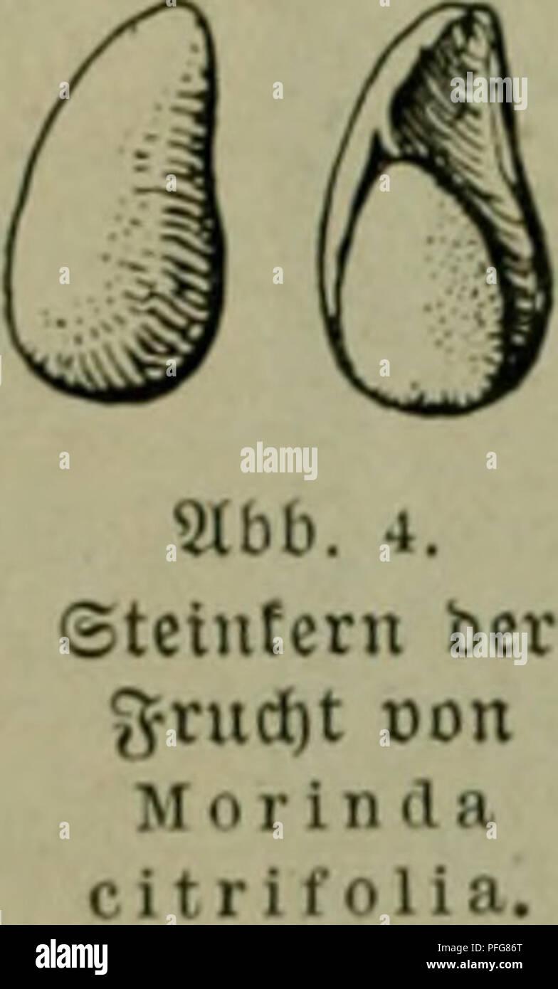 . Das Leben der Pflanze. Plants; Plants; Plants; Phytogeography. 126 ii^efiebcluiuv ^Beränbcrumj, :5'Uelfloren. Segetation cntiuicfelt i[t. 137 ^Pftan^cnarten fonnten bi§ 1906 feftgefteflt lucrbcn; an 3a^t üennef)rten fic^ fpütcrf)in bcfonbcrS bie ^^.Ujanerogamen, uon bencn 1*.»ÜG fc^on 92 9(vten uor^anben lüaren, nntcr ifjncn aud) eine &ln,5a{)( non Säumen. 9(u(f) be= ftimmte 5pflan3cngenü[fenfcljaftcn, äljnlidi benen bcr malaiifdjcn ©ebiete, ^aben fid^ fdjon ^erauSgcbilbet, irenn aud) iljre ßntinitflung nodj nid)t ben Slbfdjlutj erreicht !^at. ©oiuo^l bie Seficbler ber 5?üfte wk bie ber  - Stock Image