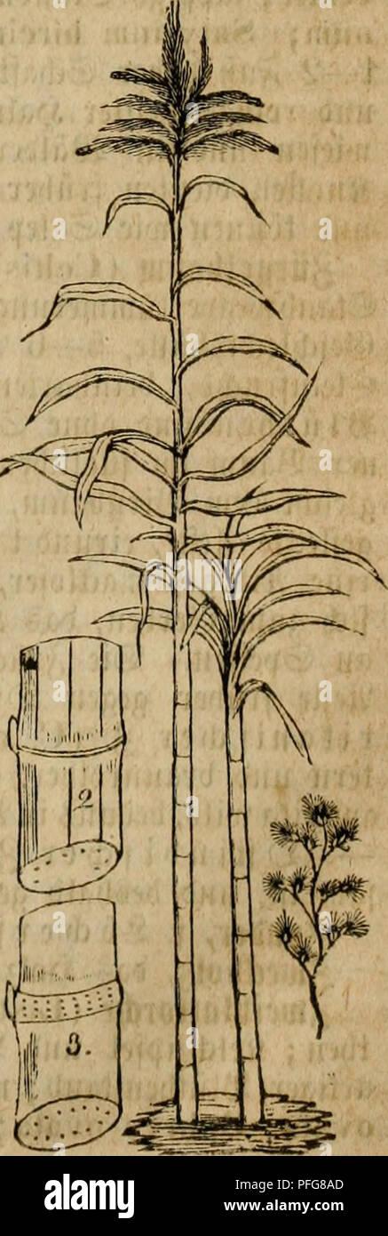 das grosse illustrirte krauter buch eine ausfuhrliche beschreibung aller pflanzen mit genauer
