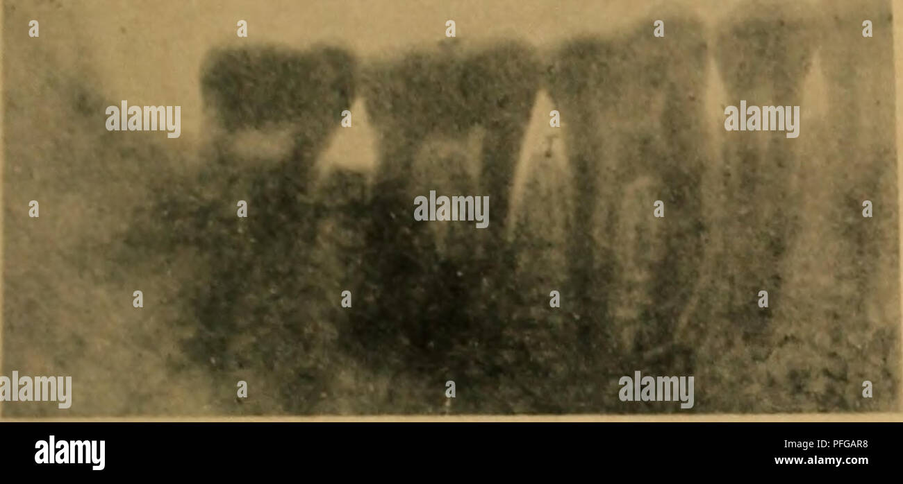 Tafel Xii Stock Photos & Tafel Xii Stock Images - Alamy