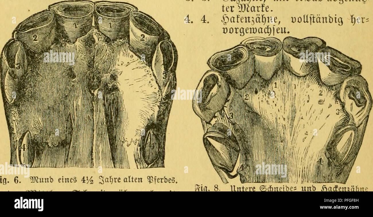 Das Pferd Stock Photos & Das Pferd Stock Images - Page 2 - Alamy